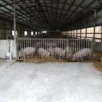 北海道ブランド豚 サチク赤豚の様子